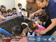 Plantando as sementes - Prof Rosana
