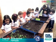 PROJETO HORTA – PLANTIO DE HORTELÃ - Rosana