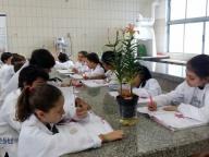 Aula prática de Ciências - 5º ano (Ensino Fundamental I)