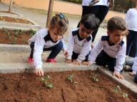 Cultivando Sabores - Plantio de Couve (Infantil 1C)