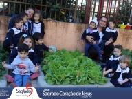 Colheita e Degustação de Alface Lisa (Infantil 1B)
