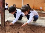 Cultivando Sabores - Plantio de Tomate Cereja (Infantil 2B)