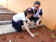 Cultivando Sabores - Plantio de Alface Saladinha (Infantil 4A)