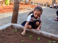 Cultivando Sabores - Plantio de Salsinha (Infantil 3B)