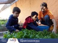 Colheita e Degustação de Alface Saladinha (Infantil 4A)