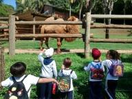 20161028 - Passeio ao Zoológico | Professora Miriam